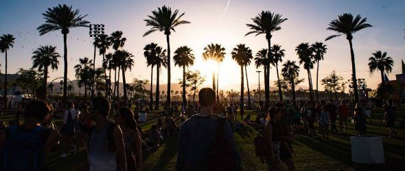 Coachella 2017 - palm trees
